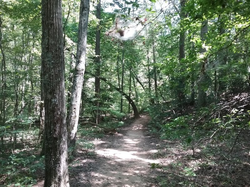 Trail through the woods.