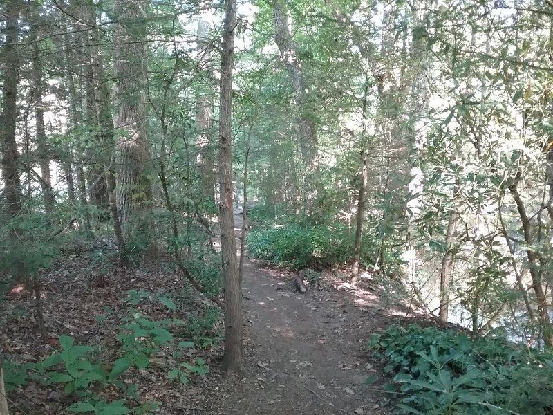 Trail along the Davidson River