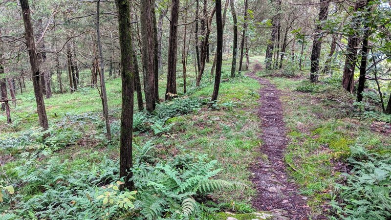 While it is not blazed, Table Rocks trail is easy enough to follow, especially in the green summer months.