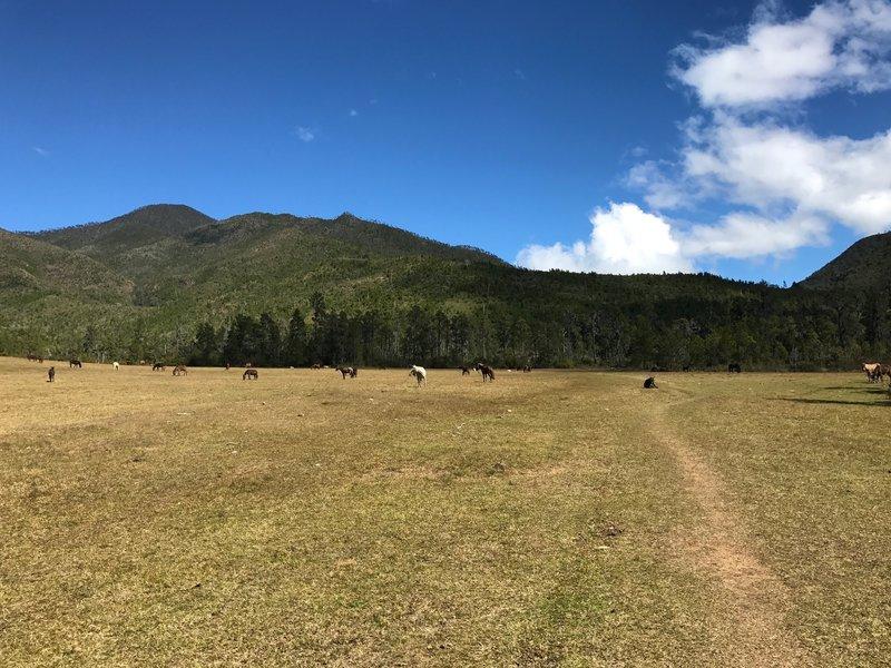 Tetero Valley
