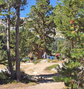 Meiss Country Campground, South Lake Tahoe, California | REI Camping