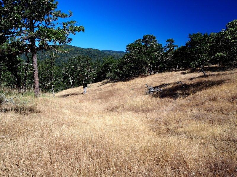 A meadow along Liz's Trail