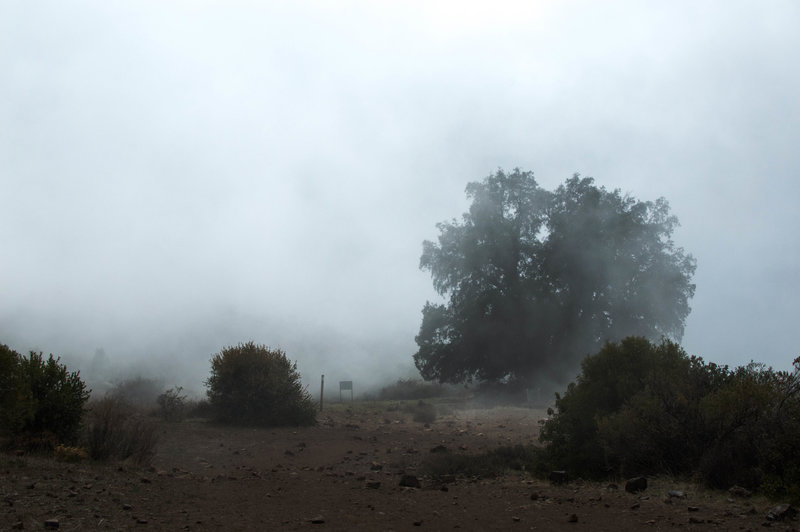Lone tree covered in mist as the clouds shroud the plateau.
