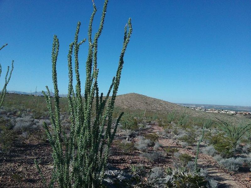 View of Del Sol Ridge