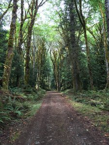 Hiking Trails near Dosewallips State Park on