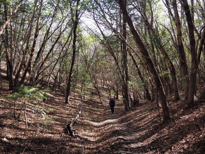 Along the Jackson Ridge Trail