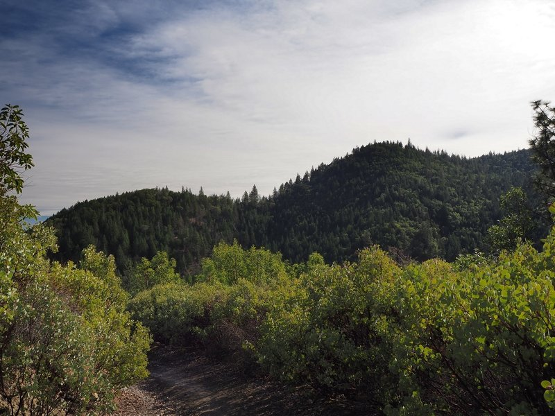 View of Twin Peaks from the Jackson Ridge Trail