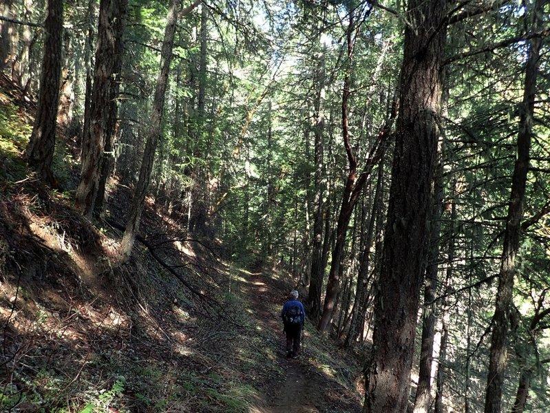 Descending the Jackson Ridge Trail toward Jackson Creek