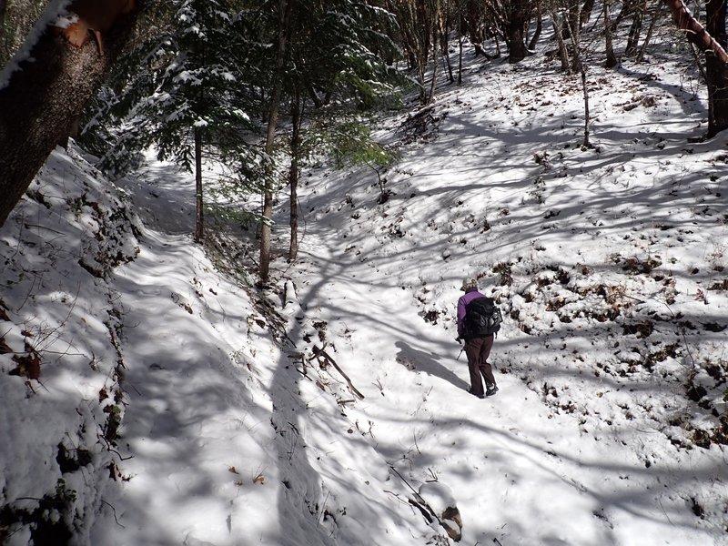 Along the Halls of Manzanita Trail in winter