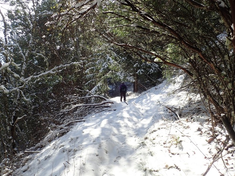 Along the Halls of Manzanita Trail in winter