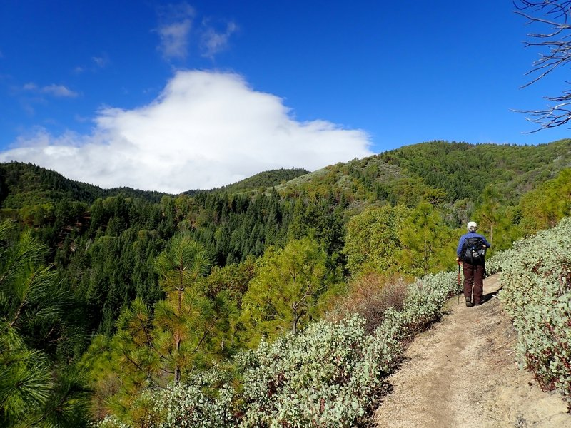 The view from the eastern side of the Halls of Manzanita Trail