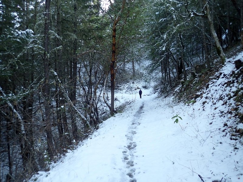 The Ol' Miners' Trail in winter