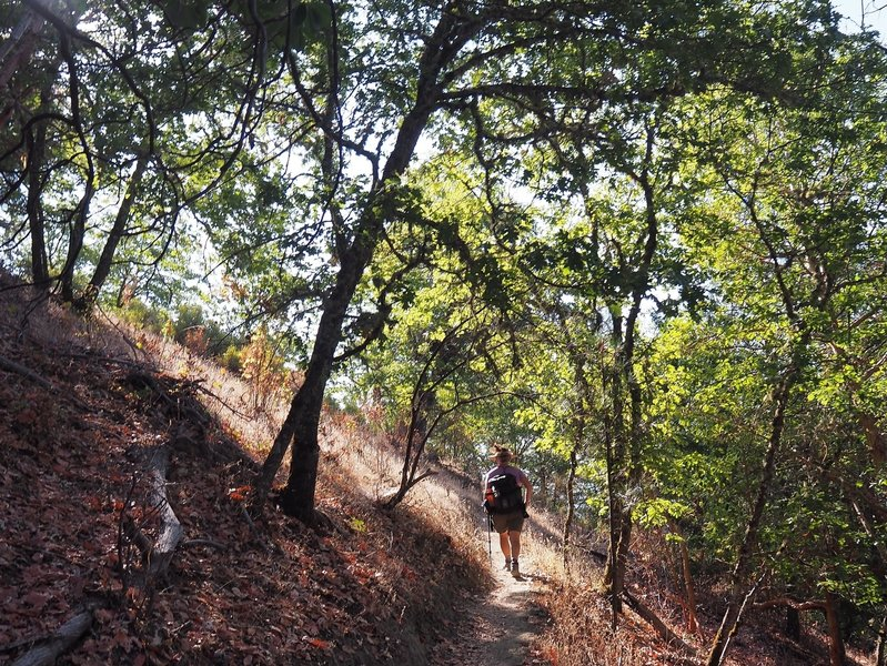 Climbing up the Siskiyou Trail