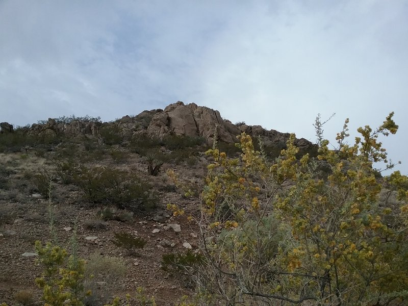View of little Tin Hill and four winged salt bush