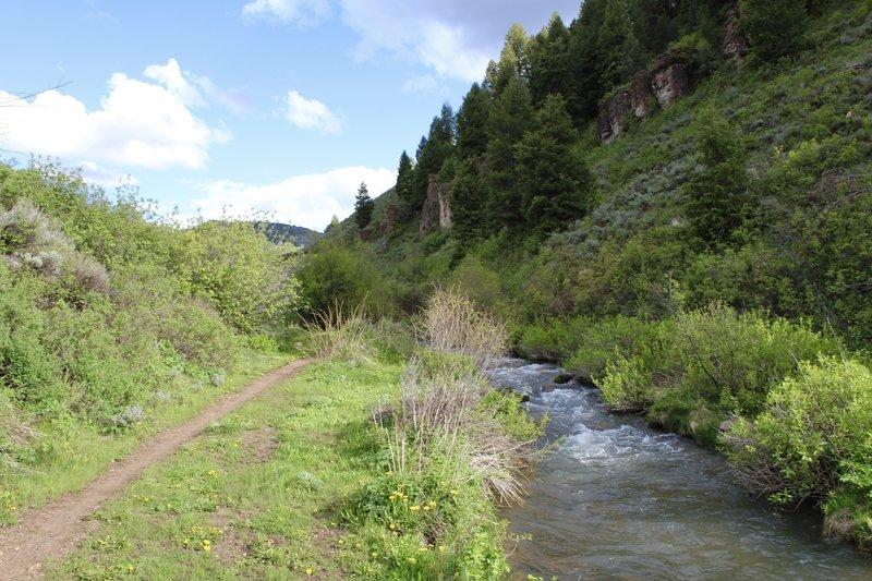 Temple Fork Sawmill Trail