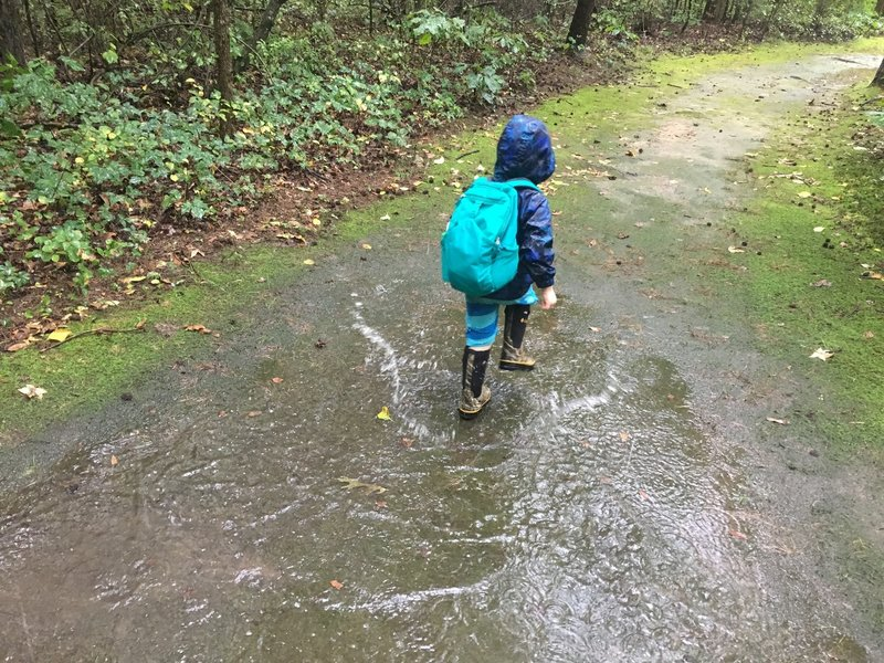 Trail condition on a rainy day, no mud
