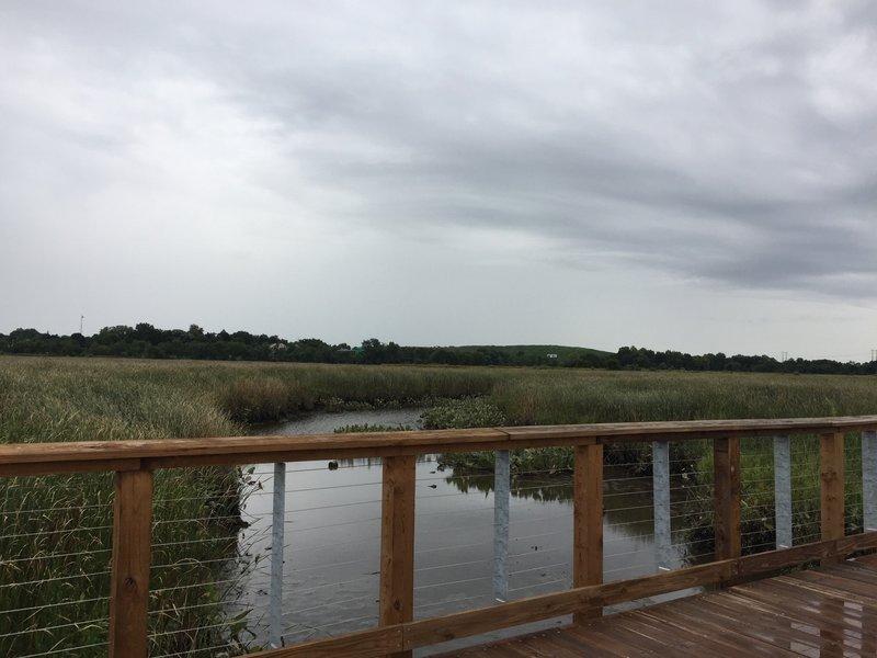 In the marsh near Wilmington.
