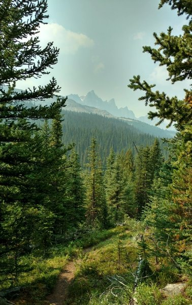 Waterfall Peaks is seen in the distance to the west, from Poboktan Pass Trail as the trail runs through the beautiful fir forest.