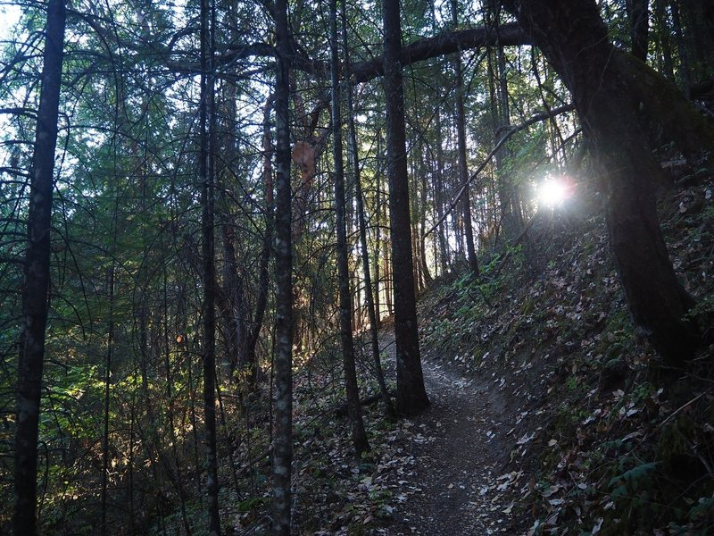 Morning light on the Boulder Trail