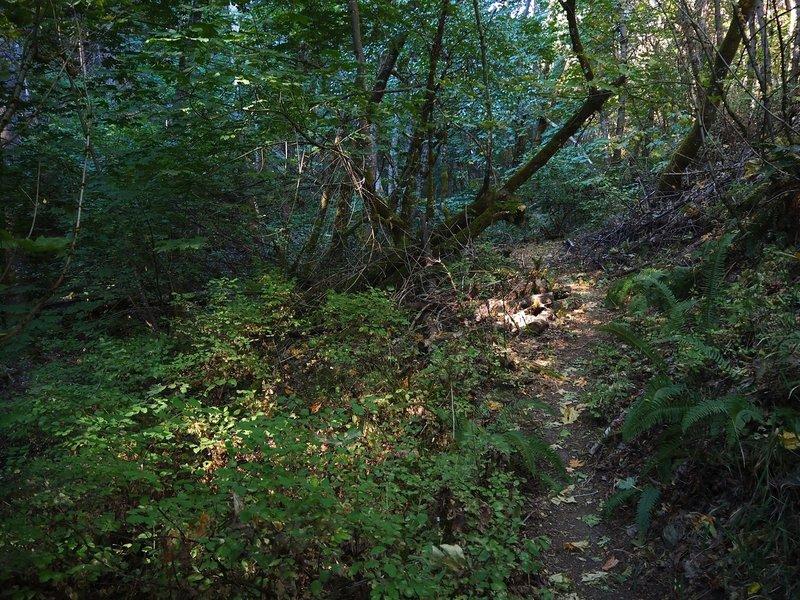Sunlight penetrates the canopy along the Jackson Creek Nature Trail