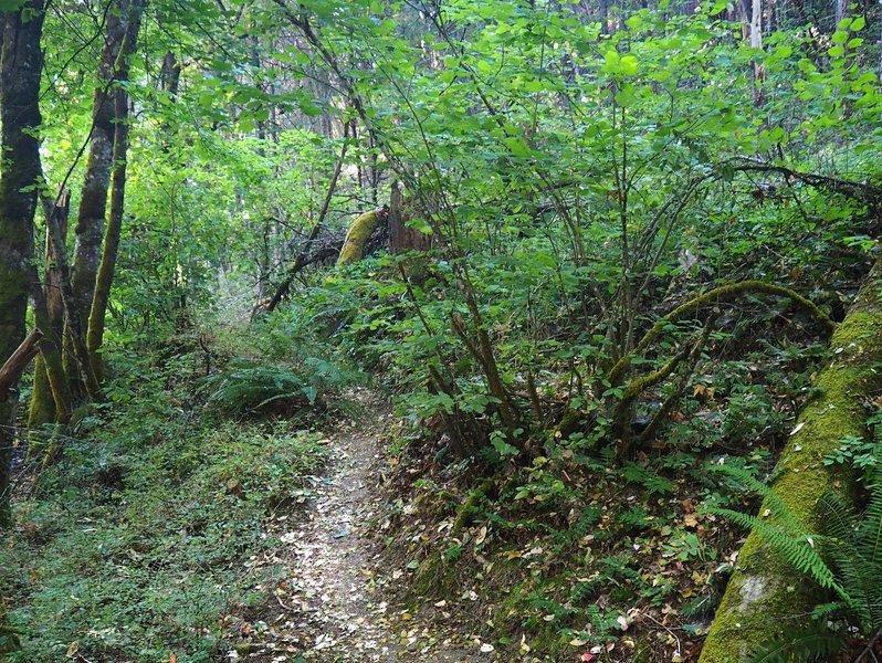 Thick vegetation along the Jackson Creek Nature Trail