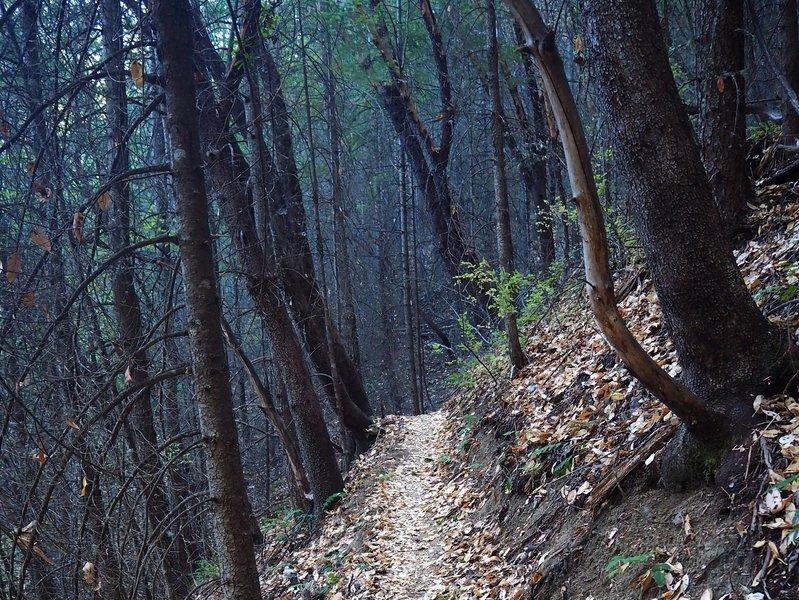 Climbing Sofie's Trail