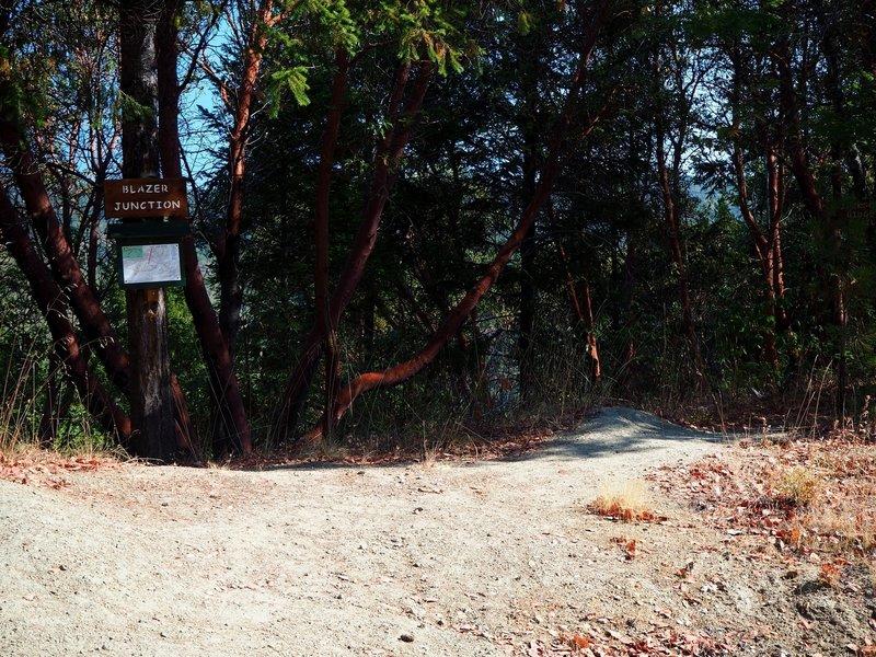 Blazer Junction, where Sofie's Trail and the Jackson Ridge Trail meet.