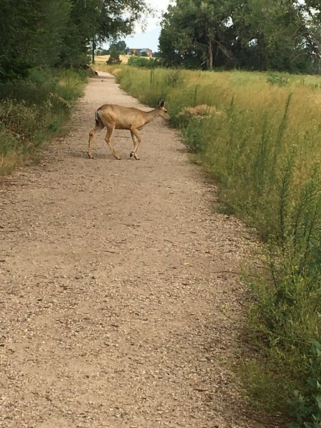 Lots of urban wildlife out and about, especially near dawn and dusk.