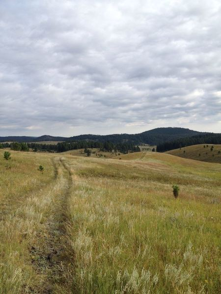 A meadow section of the Brush Creek section of the Centennial Trail