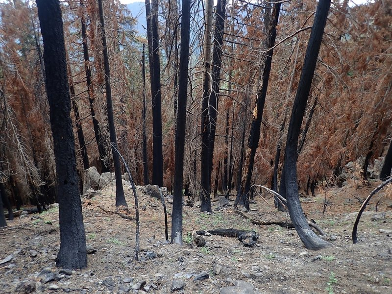 The trail passes through damage from a 2017 wildfire