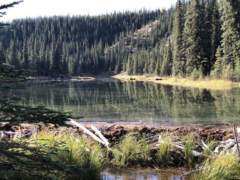 Beaver Dam at Horseshoe Lake Traial, Denali