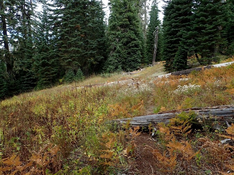 On the trail north of Hershberger Lookout