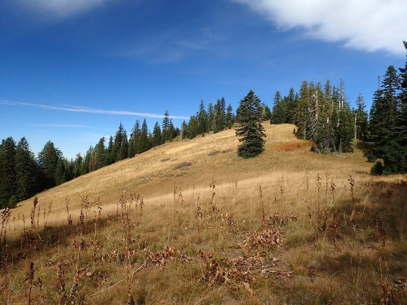 A meadow along the Divide Trail