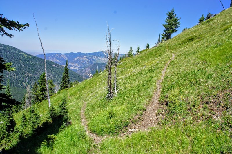 The trail winds up the steep meadow