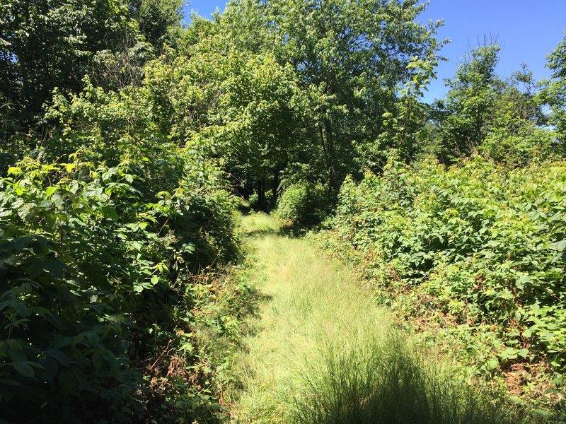 Bramley Summit Trail descent