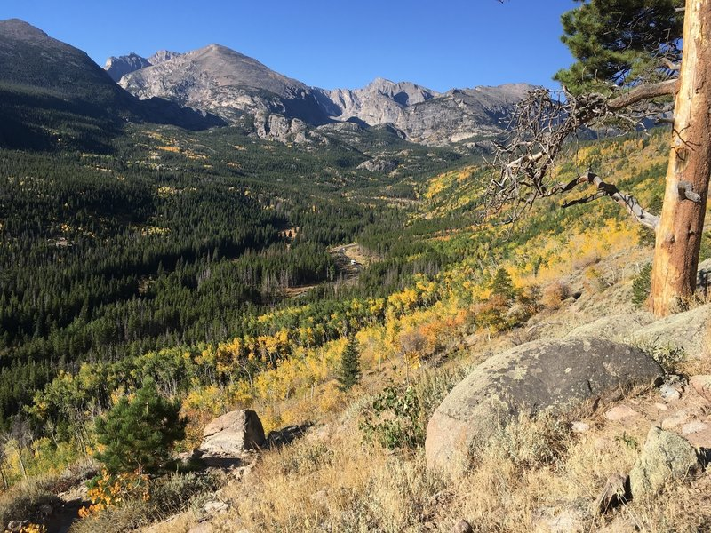 Aspens in the valley