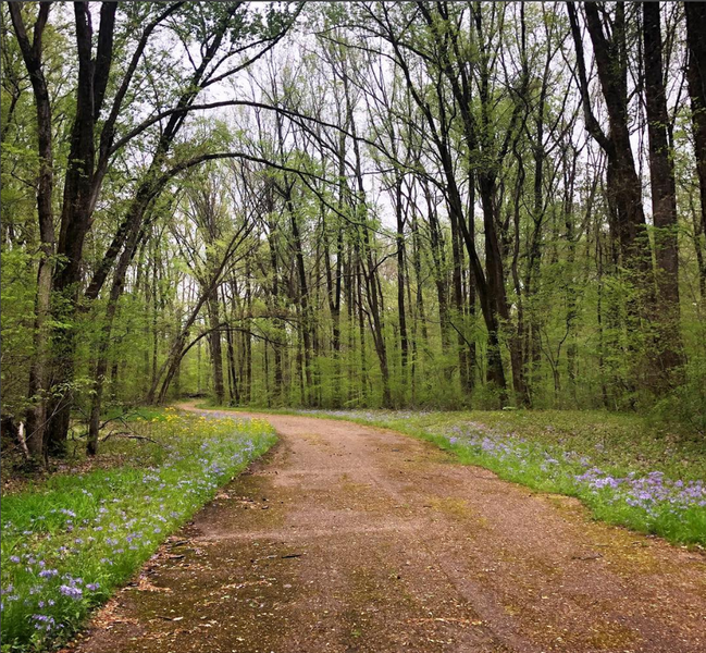Bike path near Woodland Trail (red loop)