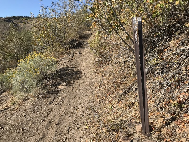 Junction of First Fork Rock Creek Trail and the Harrington Fork Trail.
