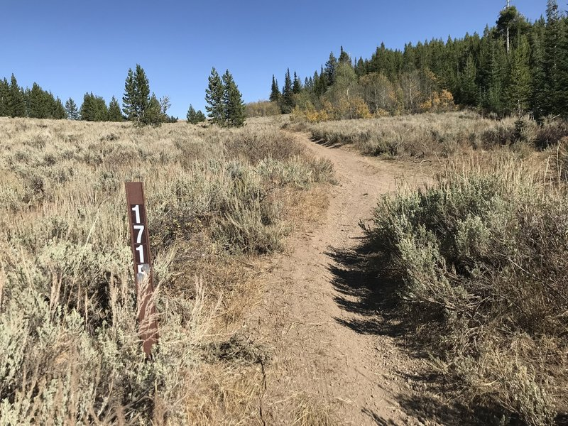 End of the Second Fork Rock Creek Trail, when it connects with ATV trail #171B at the top of Second Fork Canyon.