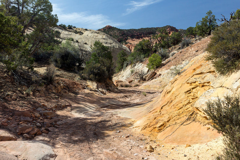 Different hues of red, orange, and yellow right next to the Red Canyon creek bed
