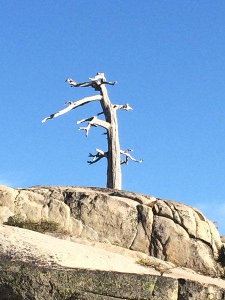 Dead Tree Looking Cool