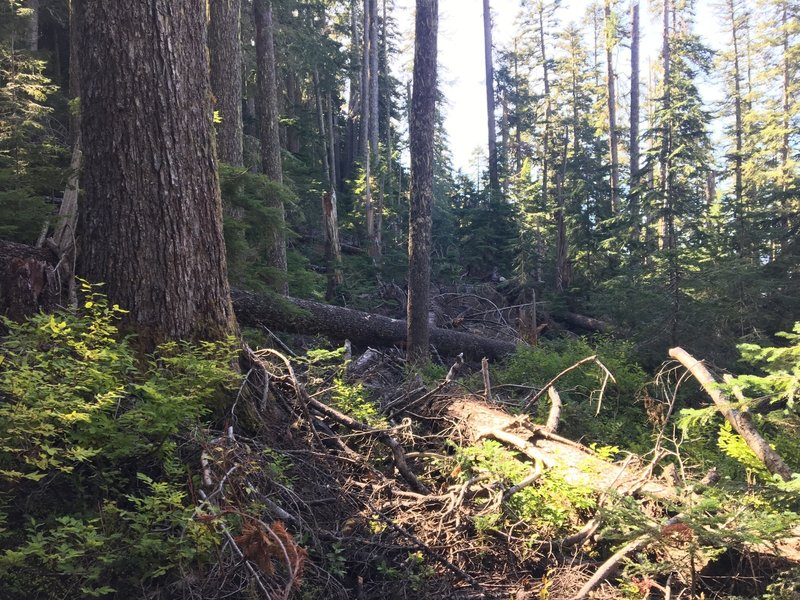 Huge section of blow downs obscuring the Kaleetan Lake Trail about 0.5 miles after Windy Lake (as of 9/25/2018).