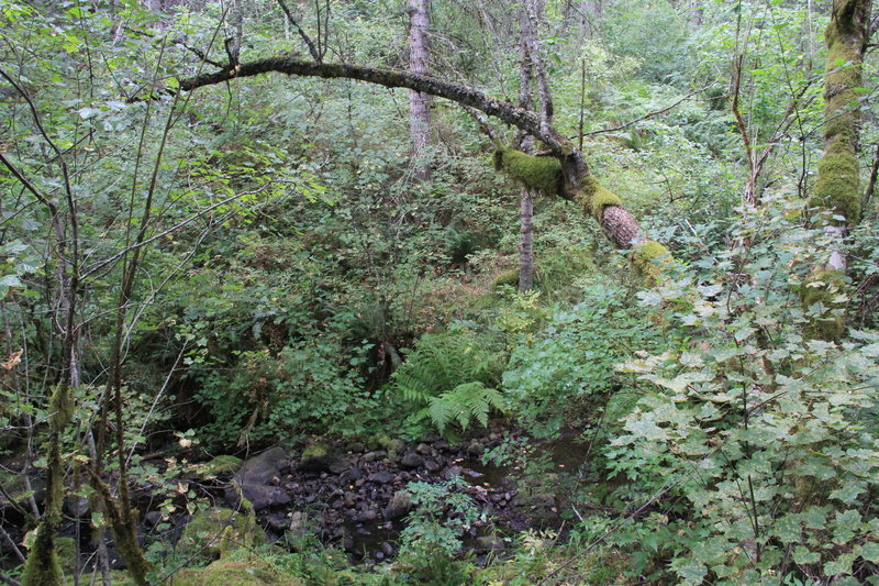 View of forest floor and creek along the trail.