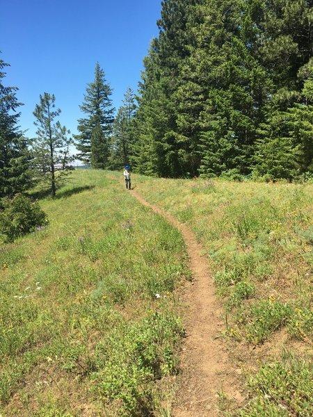 Tiger Ridge Trail above the treeline.