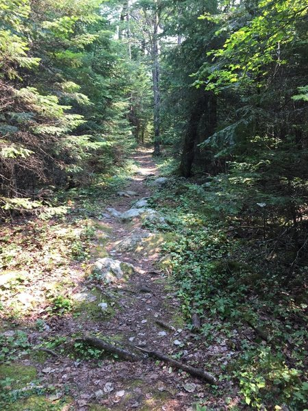 Typical trail.