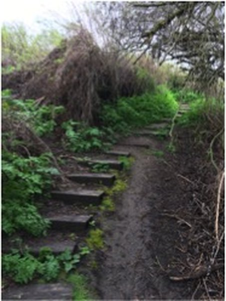 Stairway that descends into the wetland world of this nature area