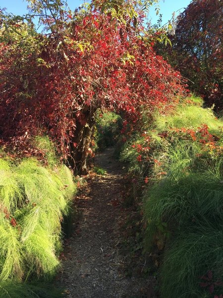 Wonderful fall foliage with trail canopied with trails and brush.  Wonderful area for children to explore.