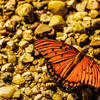 Butterflies are plentiful throughout this trail as you cross a large marshy field.