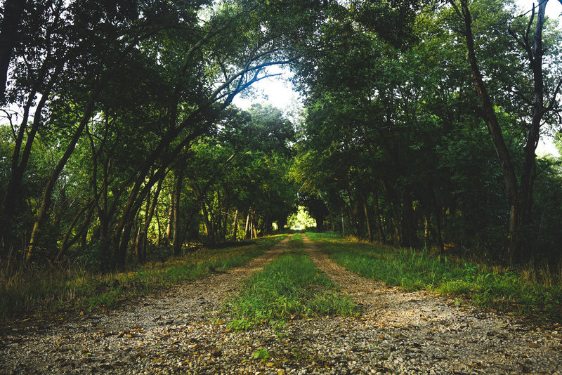 The tree-lined trail makes for an excellent hike at any time of the day.