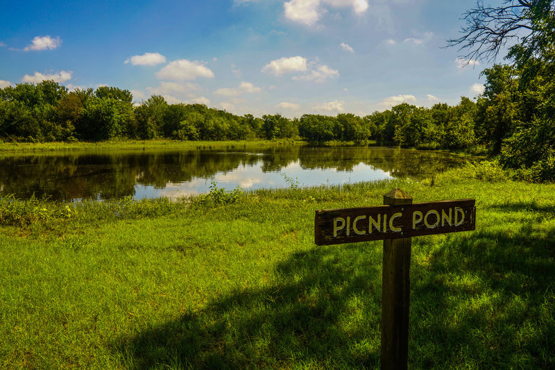 Picnic pond is a great place for fishing, bird watching, or .....a picnic.